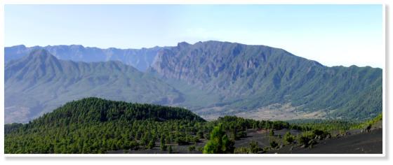 La Palma; Canary Islands; Forest at el Pilar